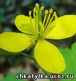 http://chkatylka.ucoz.ru/_bl/1/78434336.jpg